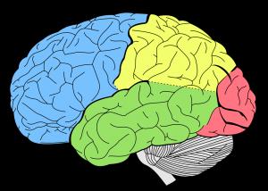 Ausgrenzung: Aggression und menschliches Gehirn