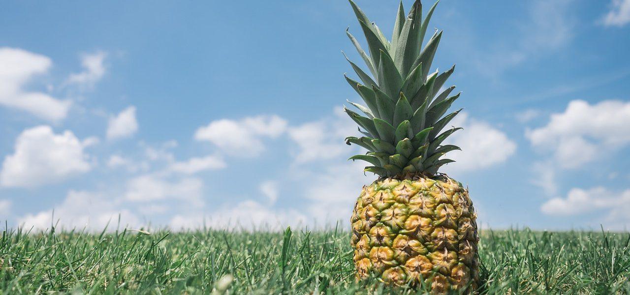 Ananas im Feld