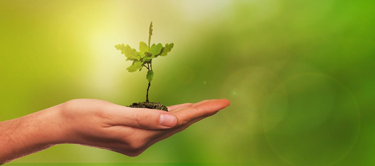 Selbstwirksamkeit Pflanze